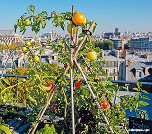 Agriculture urbaine en Pays de la Loire