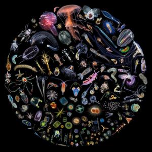 creocean projet plancton oceanique_NEP_692x692
