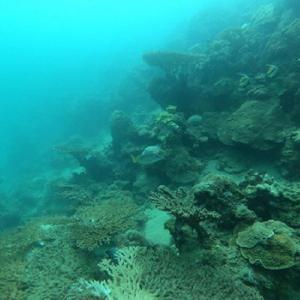 projets transplantation coraux djibouti_692x692