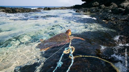 Collecte et valorisation des déchets plastiques au Cap Vert-tortue
