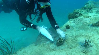 creocean actualites transplant coraux Mada1_1000x583